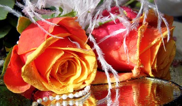 Roses perles  HD wallpaper
