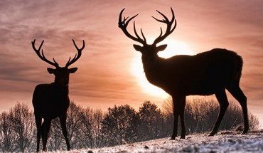 Sun animals deer silhouettes snow HD wallpaper
