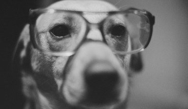 Animals dogs glasses grayscale HD wallpaper