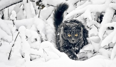 Animals cats fluffy plants snow HD wallpaper