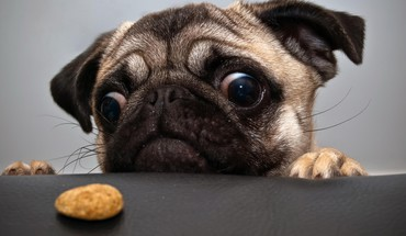 Animals dogs eyes funny HD wallpaper