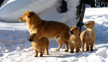 Dog family HD wallpaper