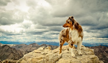 Dogs pets rocks HD wallpaper