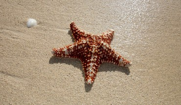 Beach starfish HD wallpaper