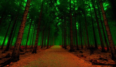 Green forest path HD wallpaper