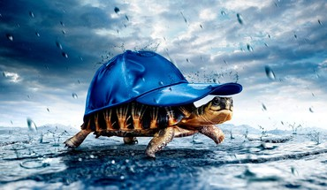 Animals baseball caps tortoises HD wallpaper