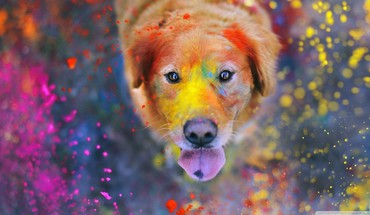 Animals dogs paint colors retriever HD wallpaper