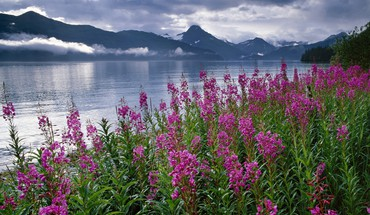 Mountains landscapes nature flowers alaska lakes national park HD wallpaper