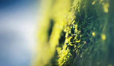 Moss north HD wallpaper