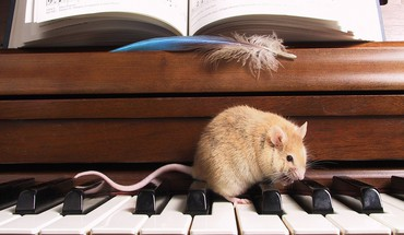 Music piano animals mice HD wallpaper