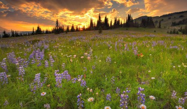 Clouds landscapes nature trees flowers wildflowers HD wallpaper