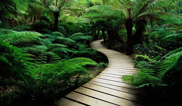 Jungle landscapes rainforest trail HD wallpaper