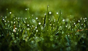 Green nature grass water drops macro dew HD wallpaper