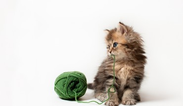 Little kitten playing HD wallpaper