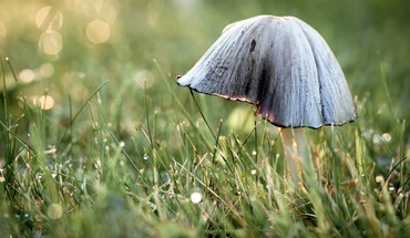 Grass mushrooms macro fungus HD wallpaper