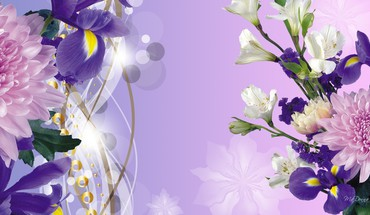 Purple iris spring HD wallpaper