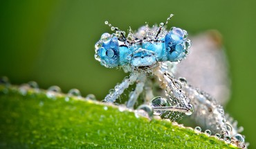 Animals insects macro dragonflies HD wallpaper