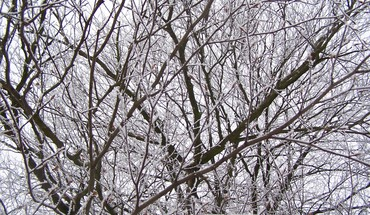 White branches HD wallpaper