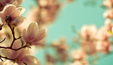 Natur blossom  HD wallpaper