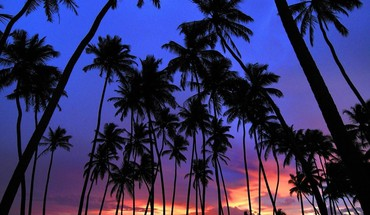 Sri lanka landscapes nature palm trees silhouettes HD wallpaper