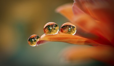 Flowers macro nature water drops HD wallpaper