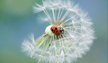 Nature flowers lady bugs petal HD wallpaper