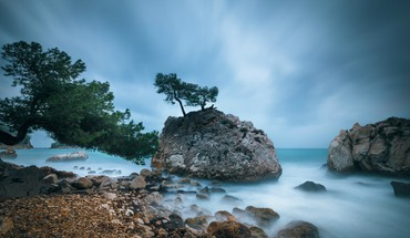 Coast trees HD wallpaper