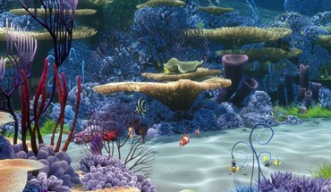 Water coral underwater reef world HD wallpaper