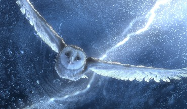 Movies owls legend of the guardians birds HD wallpaper