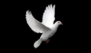 Birds peace dove HD wallpaper