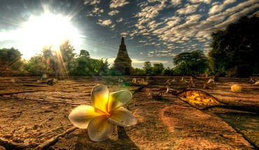 Light landscapes nature flowers thailand mai afternoon plumeria HD wallpaper