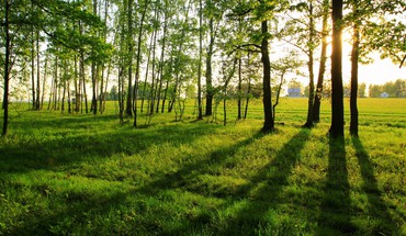 Nature trees grass sunlight HD wallpaper
