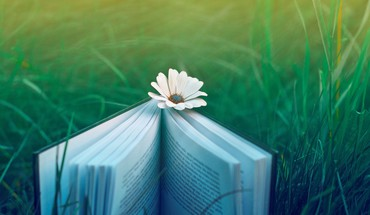Books flowers grass HD wallpaper