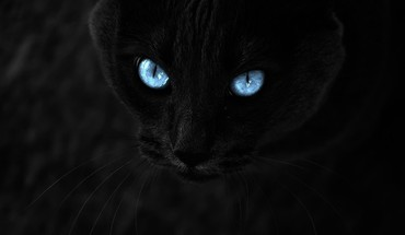Eyes cats blue HD wallpaper