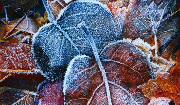 Autumn (season) leaves frost HD wallpaper