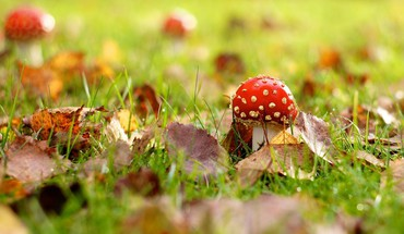 Fallen leaves mushrooms nature HD wallpaper