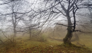Landscapes nature fog secret branches HD wallpaper