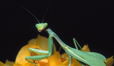 Animaux insectes  HD wallpaper