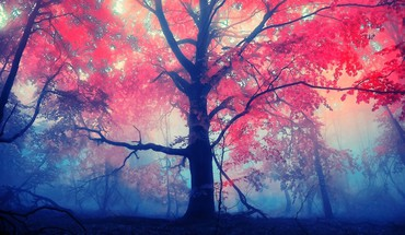 Red autumn tree HD wallpaper