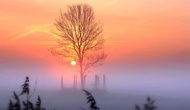Trees dawn fog HD wallpaper