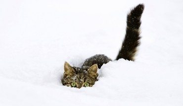 Winter snow cats animals funny HD wallpaper