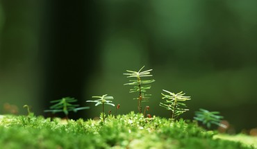 Herbe Nature  HD wallpaper