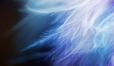 Abstract feathers HD wallpaper