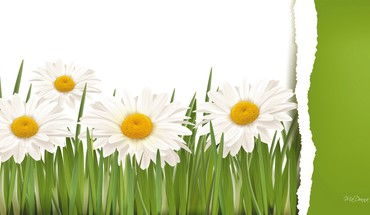 Daisy design HD wallpaper