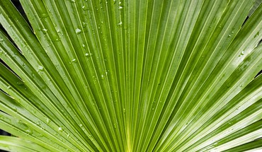 Green water drop plants palm leaves HD wallpaper