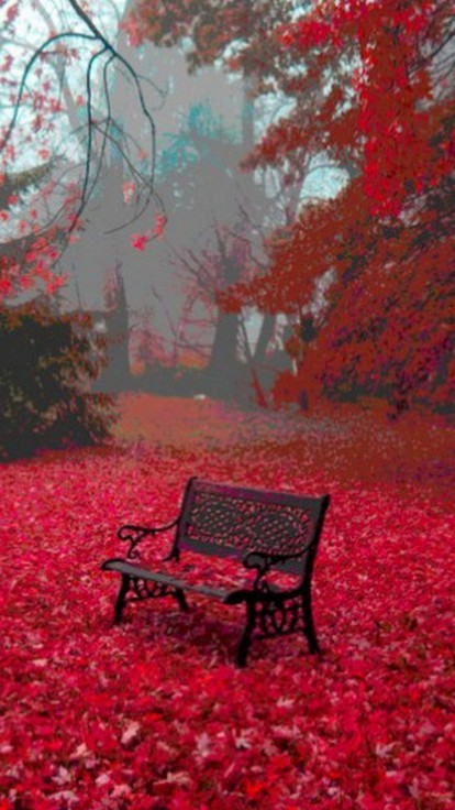 Leaves Bench Serene Carpet Surrounded Background Sea