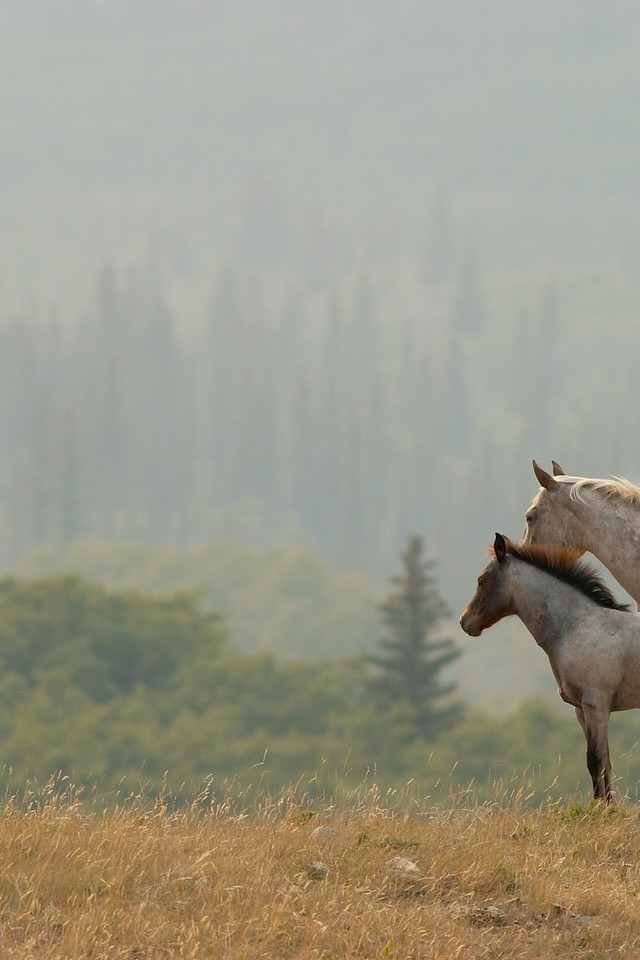 horse wallpaper awesome pair - photo #36