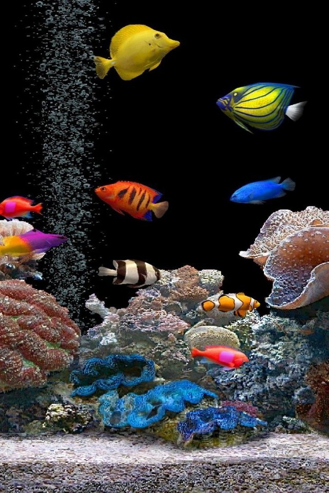 aquarium wallpaper for iphone 5