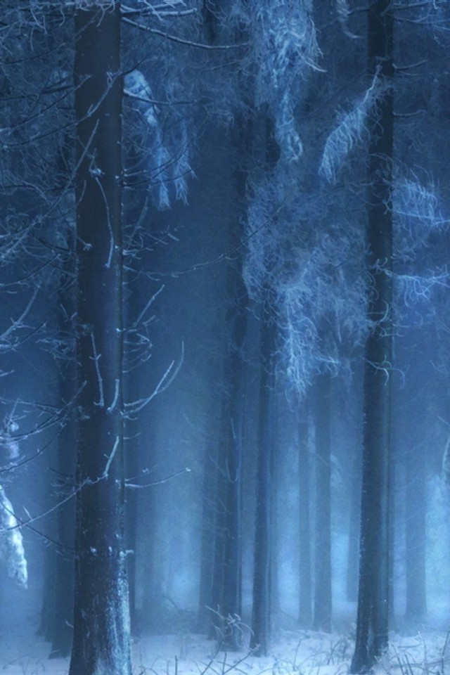 mysterious forest in winter - photo #1