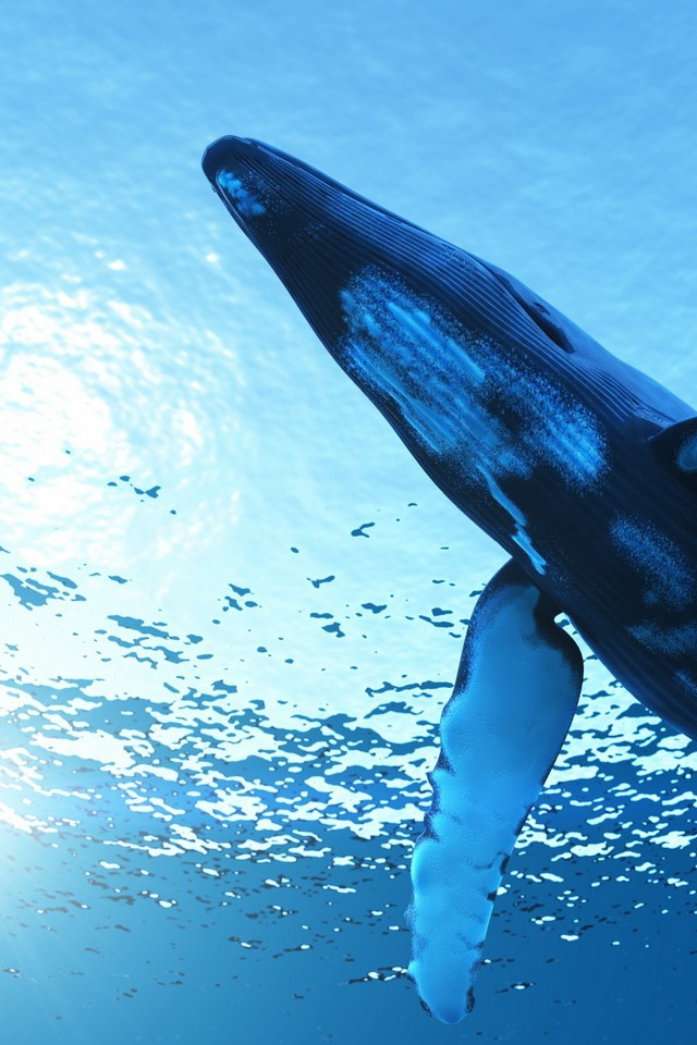 Whales Humpback Whale Wallpaper